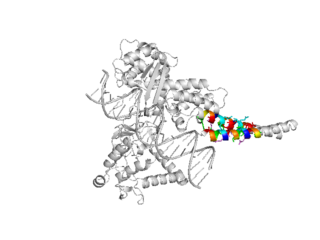 1a36 rendered using PYMOL